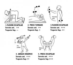 ejercicio pesas hombro